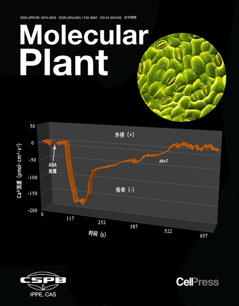 NMT钙流在H2S调控ABA信号通路研究中充当关键生理证据