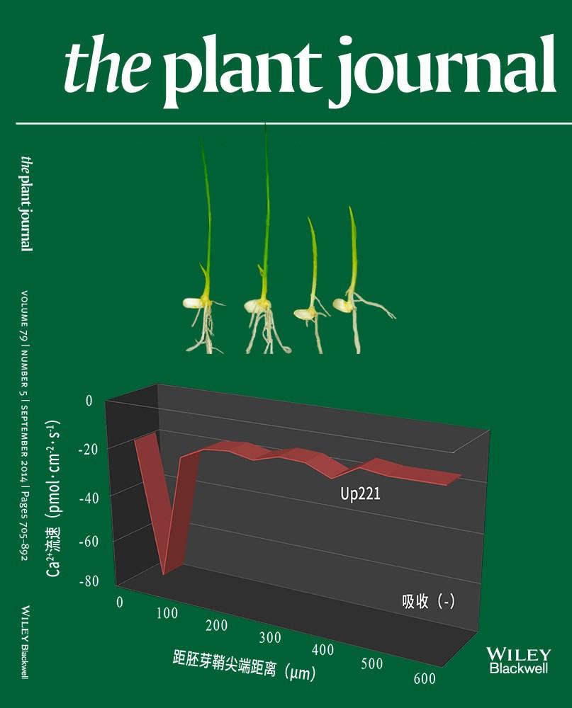 NMT钙流为水稻OsCBL10启动子变异影响种子耐淹力提供证据