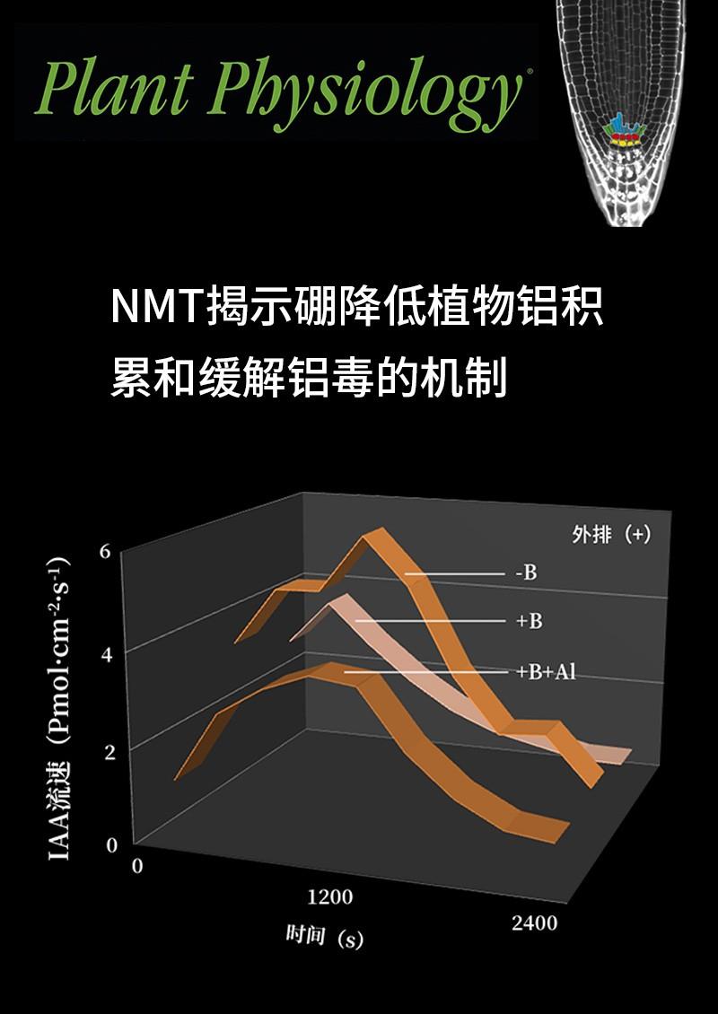 NMT揭示硼降低植物铝积累和缓解铝毒的机制