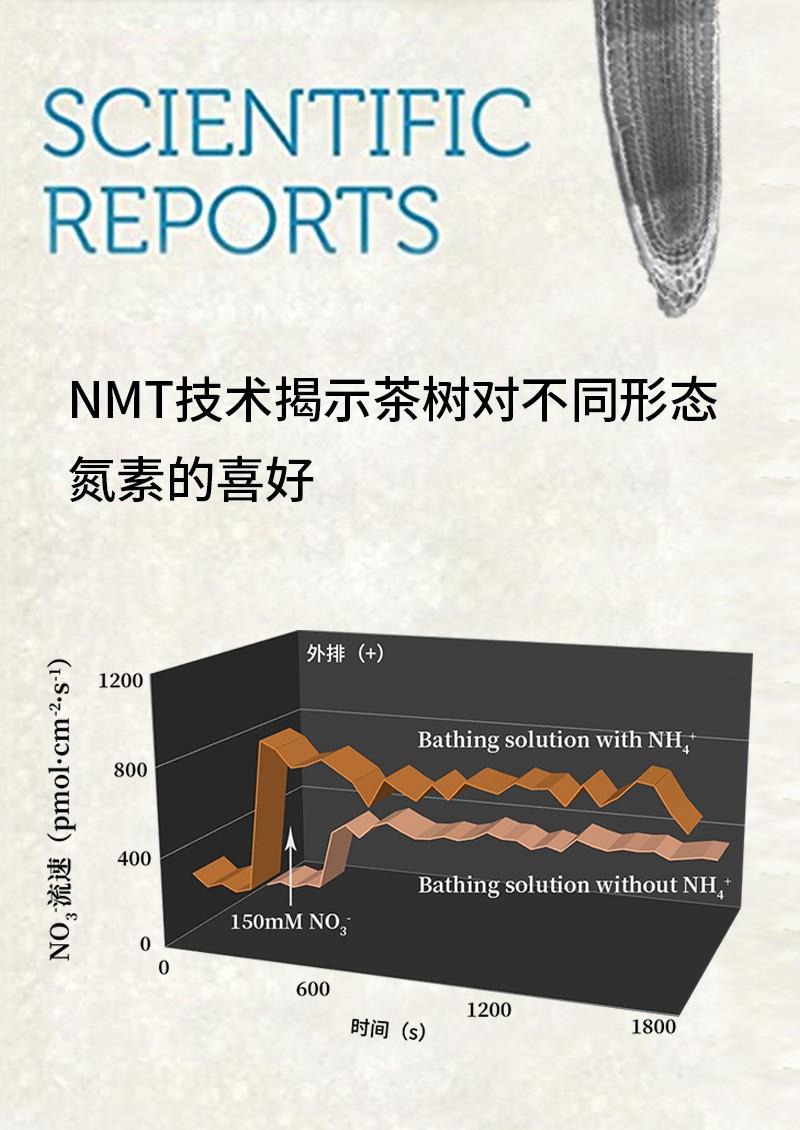 NMT技术揭示茶树对不同形态氮素的喜好