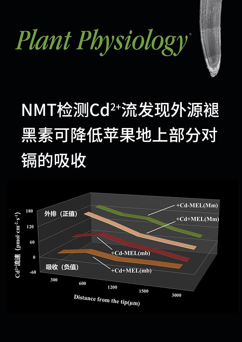 NMT检测Cd2+流发现外源褪黑素可降低苹果地上部分对镉的吸收