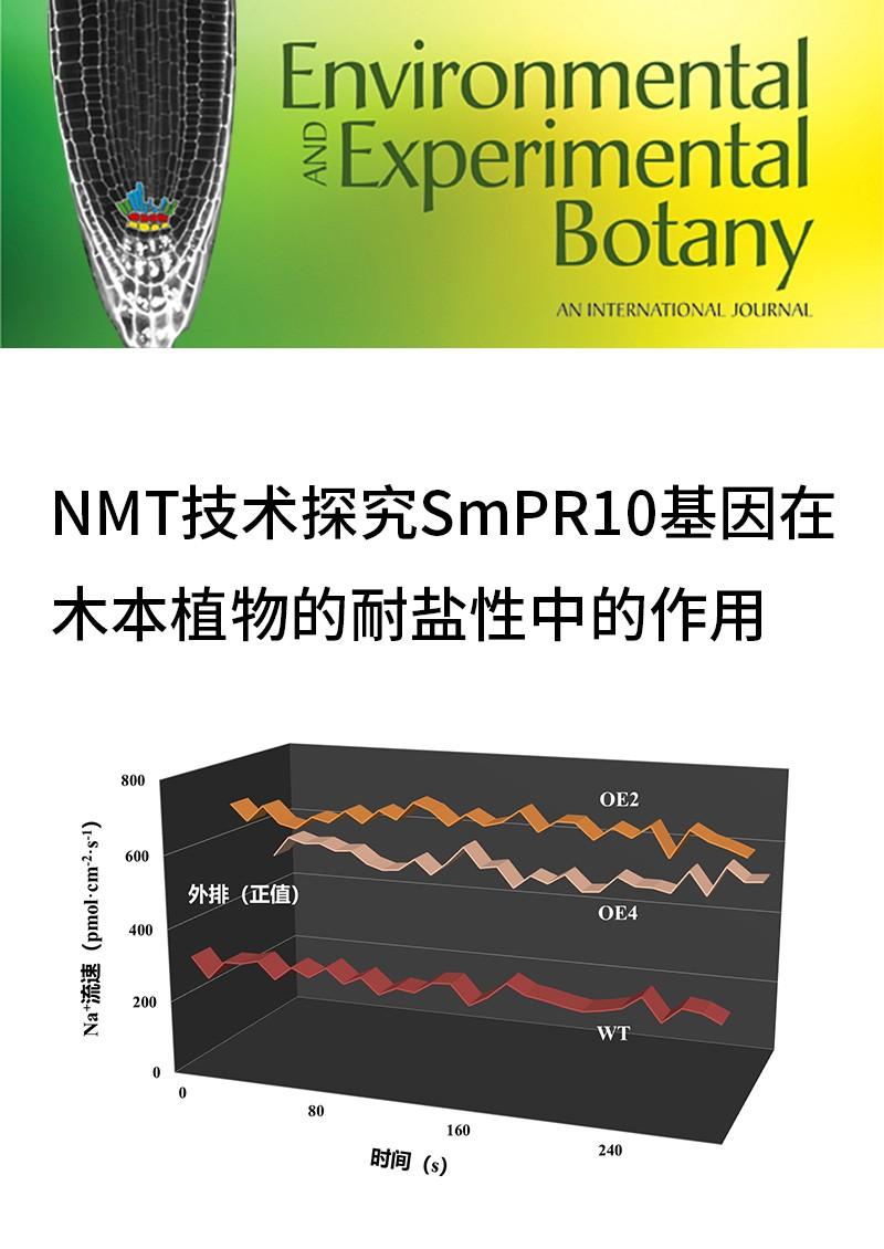 NMT技术探究SmPR10基因在木本植物的耐盐性中的作用