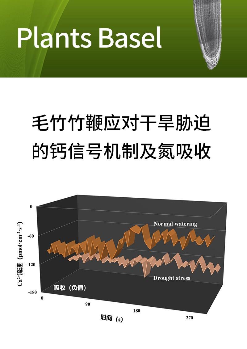 毛竹竹鞭应对干旱胁迫的钙信号机制及氮吸收