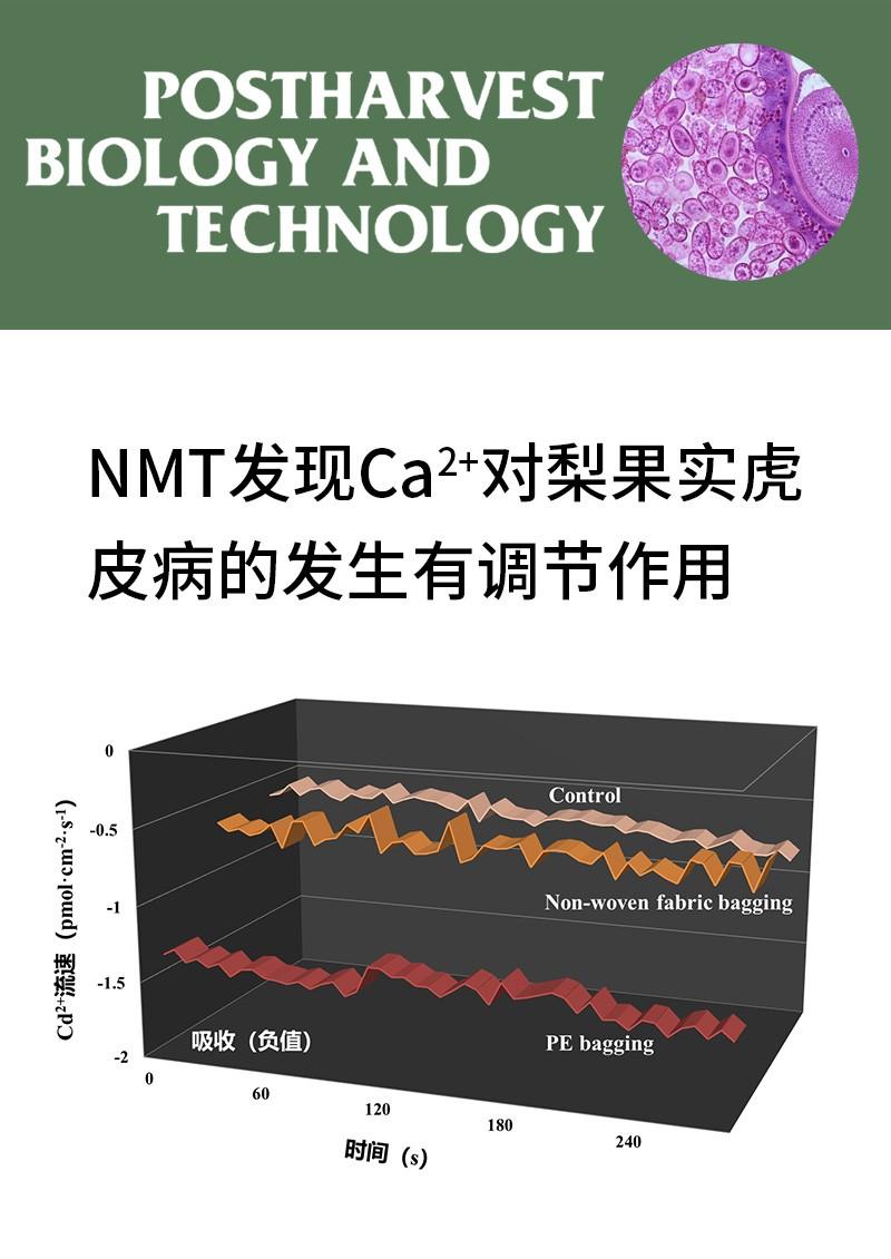 NMT发现Ca2+对梨果实虎皮病的发生有调节作用