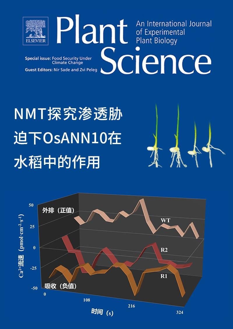NMT探究渗透胁迫下OsANN10在水稻中的作用