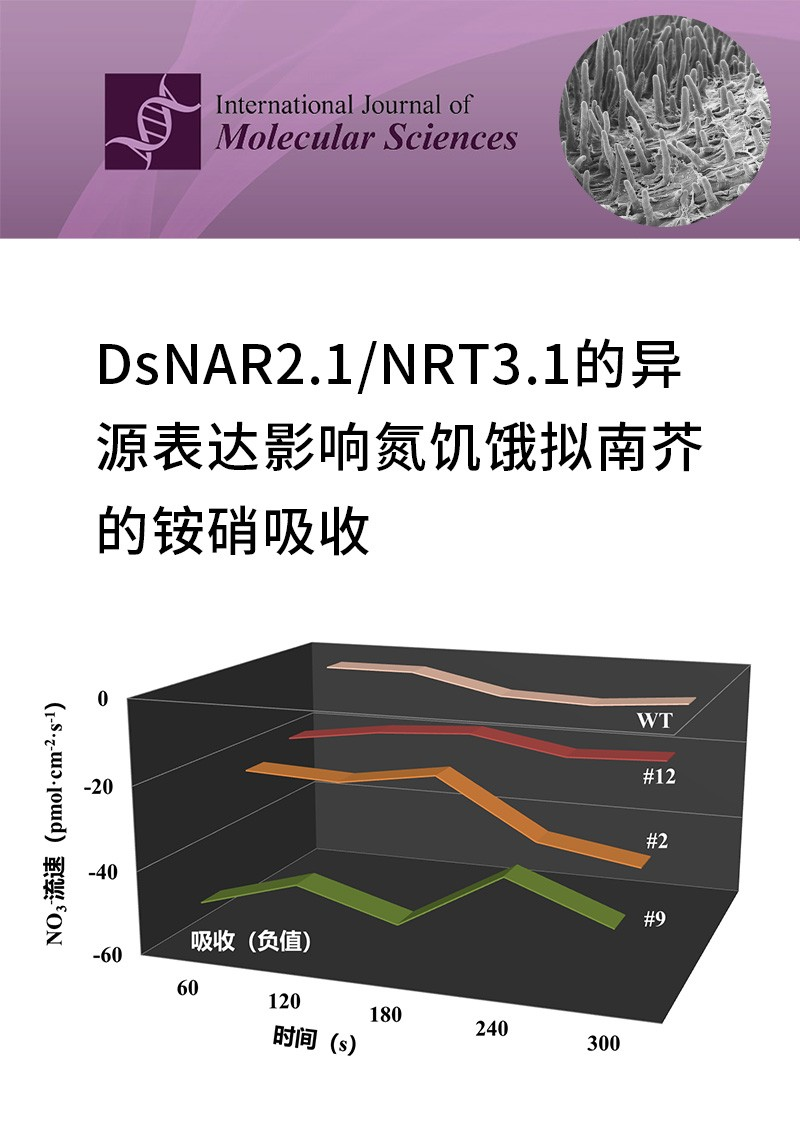 DsNAR2.1/NRT3.1的异源表达影响氮饥饿拟南芥的铵硝吸收