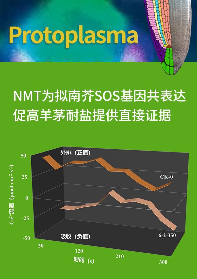 NMT为拟南芥SOS基因共表达促高羊茅耐盐提供直接证据