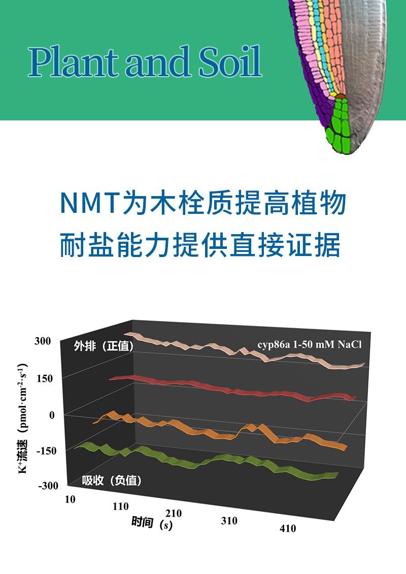 NMT为木栓质提高植物耐盐能力提供直接证据