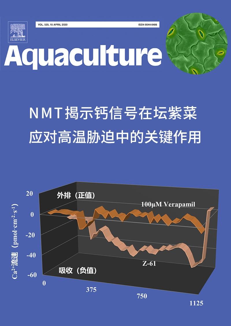 NMT揭示钙信号在坛紫菜应对高温胁迫中的关键作用
