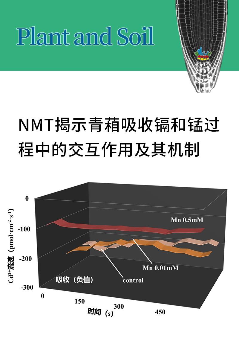 NMT揭示青葙吸收镉和锰过程中的交互作用及其机制