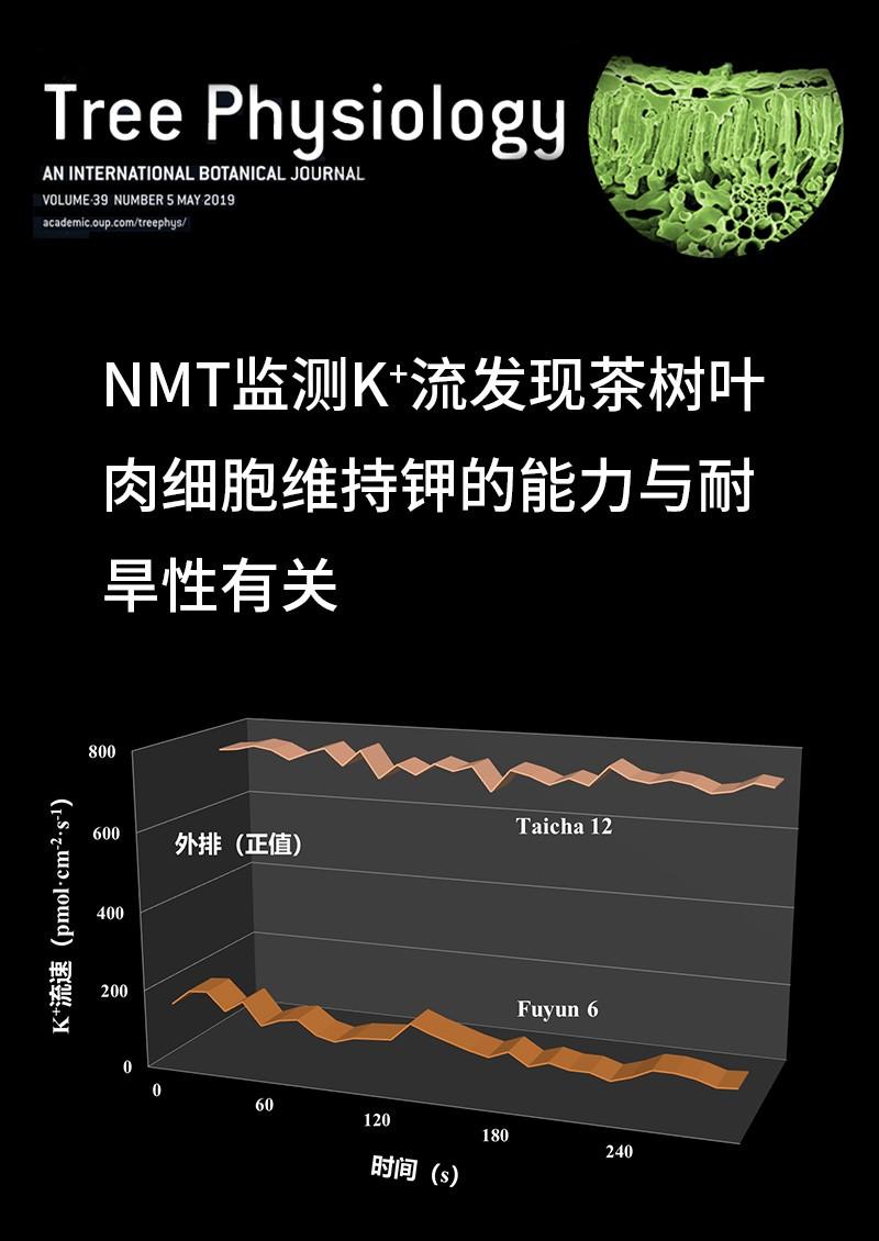 NMT监测K+流发现茶树叶肉细胞维持钾的能力与耐旱性有关