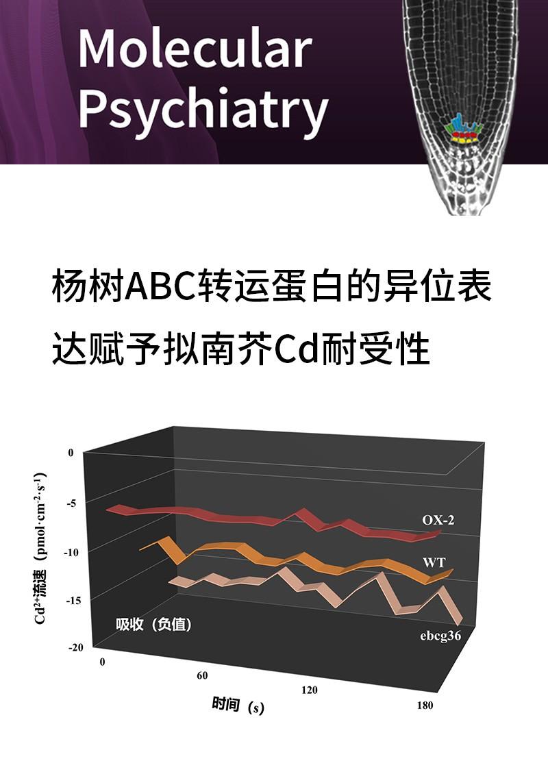 杨树ABC转运蛋白的异位表达赋予拟南芥Cd耐受性